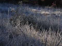 A frozen field (Hlne_D) Tags: winter plant france tree field forest plante frost hiver hike paca provence arbre ballade fort champ givre alpesdehauteprovence ahp provencealpesctedazur pierrevert hlned