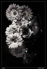 Still Life (meggiecaminos) Tags: flowers bw stilllife white black flores blanco glass bottle negro bn fiori bianco nero botella bodegon vetro bottiglia cristral