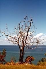 Australia. Darwin. (pszz) Tags: tree birds coast australia darwin