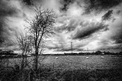 Roadside photo 2 (Lou-bella) Tags: sky blackandwhite holland nature clouds landscape blackwhite fineart wide thenetherlands roadside a6000 vclecu1 sel1628 sel16mm ilce6000 sonya6000