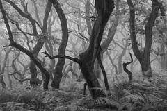 The Runt (thefattaff) Tags: woodland sugarloaf derifach