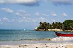 Playa San Diego (Races annimas) Tags: costa arbol atardecer mar colombia pescador caribe pescar pelcano islafuerte arbolquecamina