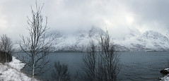 the fjord still resists freezing over (lunaryuna) Tags: trees winter panorama snow mountains water weather norway season landscape coast mood shore silence fjord lunaryuna cloudscape hibernation northernnorway tromsfylke arcticregion lyngenalps seasonalwonders kjosenfjord