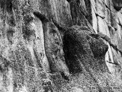 Hros oublis (JEAN PAUL TALIMI) Tags: paris france texture noir noiretblanc pierre guerre perelachaise iledefrance ville calme vieux visage personnages fantomes talimi murdesfederes