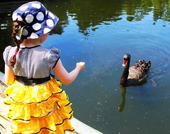 Hand of Friendship (gfacegrace) Tags: friends lake black love nature water beautiful birds animals yellow swimming swim swan pretty child friendship feeding feathers polkadots spots swans feedingthebirds littlegirl serene feed reach swanlake fascination dots creatures discovery blackbirds blackswan naturephotography intrigue blackswans newfriends yellowskirt animalphotography beautifulnature birdphotography birdfeed beautifulbirds girlandswan handoffriendship swansonlake childandswan