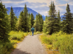 Take a Stroll With Nature - Denali National Park, Alaska (kweaver2) Tags: park trees mountain man art nature alaska landscape photography path walk fine hike trail national denali kathyweaver