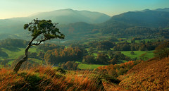 Loughrigg Terrace Lone Tree (Andy Watson1) Tags: park uk trip travel november autumn trees light england lake blur mountains tree english fall canon landscape countryside scenery shadows view britain terrace district united great scenic sigma kingdom national cumbria fields lone british autumnal langdale elterwater loughrigg 70d