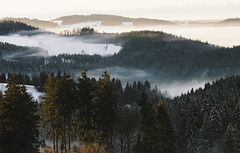 Home (desomnis) Tags: morning trees winter mist snow cold home nature misty fog forest sunrise landscape austria landscapes morninglight woods foggy landschaft upperaustria mhlviertel landscapephotography winterly canon6d canon135mmf20 desomnis