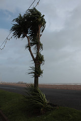 Windy Worthing Palm