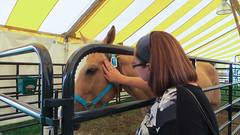nathalie. july 2015 (timp37) Tags: county summer horse july indiana nat fair nathalie porter 2015