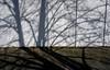 Spring Shadows (joaobambu) Tags: