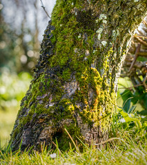 Moss and lichen on a tree