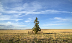 the sacred tree (eDDie_TK) Tags: colorado weld co pawneegrasslands weldcounty weldcountyco