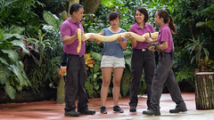 it´s show time (diwan) Tags: city canon geotagged eos zoo asia southeastasia singapur singaporezoo citystate 2015 republicofsingapore 新加坡共和国 சிங்கப்பூர்குடியரசு stadtstaat 新加坡动物园 canoneos650d islandcountry shawfoundationamphitheatre republiksingapur rainforestfightsbackshow geo:lon=103794947 geo:lat=1404613