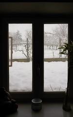Risvegli (cena.christian12) Tags: snow window landscape letitsnow mattina cosebelle ottimirisvegli