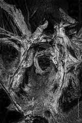roots (imagomagia) Tags: wood trees light blackandwhite tree art nature monochrome forest woods roots naturallight monocromatic nophotoshop bnw greyscale fineartphotography blackandwhitephotography artphoto artphotography conceptualphotography seleniumtoner artofvisuals artofvisual extremebnw