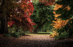 Bodnant Gardens - North Wales (fragrance190) Tags: autumn trees colour nature gold sony 28mm serene tranquil a7 28mmf2 sonya7