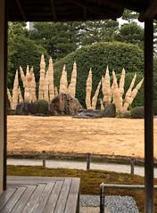 20160229-111729_5K_80 (pya) Tags: kyoto 京都 camellia plumblossoms jonangu 梅花 茶花 城南宮 椿花 weepingplumblossoms