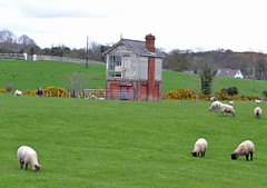 Funny wee building in the middle of a field in Ballyward (conall..) Tags: house sheep box disused signal signalbox stationroad greatnorthernrailway ballyward ballywardrailwaystation