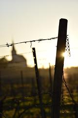 Guten Morgen Hochheim (lambda_X) Tags: kirche sonnenaufgang gegenlicht hochheim weinberge stpeterundpaul