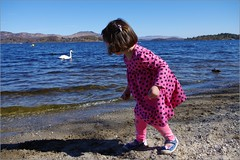 Swan Lake (Ben.Allison36) Tags: scotland loch lomond luss