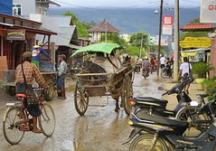 The pig enjoys the view of the main street of Nyaung Shwe (Bn) Tags: road street travel people horse dog lake fish dusty bike architecture river season walking gold pig pagoda town meer locals carriage market burma stupa main markets floating scooter tourist fresh busy rainy myanmar inlelake inle horsedrawn shan backpacker topf100 birma channel stepped shanstate chedi backpackers nyaungshwe nyaung yadana shwe 100faves guesthouses manaung mirrortiled paungdawseiqrd