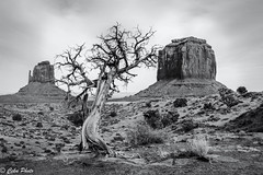 Trees and monuments (cekuphoto) Tags: arizona nikon unitedstates monumentvalley d7100