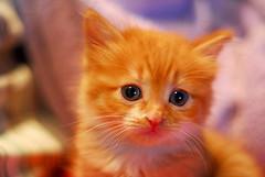 Innocence (Rickydavid) Tags: cat kitten innocence gatto micio innocenza