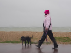 Walking the Dog Solent Seafront (fstop186) Tags: sea dog storm black wet glass rain walking lens spring candid windy olympus rainy poodle promenade solent spaniel seafront windscreen em1 mft microfourthirds olympusmzuiko1240mmf28toppro
