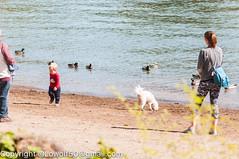 _DSC4783.jpg (orig_lowolf) Tags: usa dog nature oregon nikon flickr lakeoswego turkeyvulture d300s sigma150500mmf563afapodgoshsmtelephotozoom