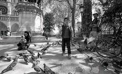 pigeons parisiens, 2 (Patrick.Raymond (2M views)) Tags: street paris nikon tmax pigeons argentique expressyourself