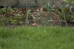 """In the Frame (Xsbmrnr (Please read profile before """"following"""") Tags: rabbit nature animals"""