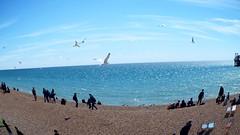 Fun on the Beach (bimbler2009) Tags: sea people seagulls beach fisheye outerspace movementmotion fujifilms9900w