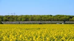 different layers of spring II (rainbowcave) Tags: trees sky cars field crane himmel autos bume kran canola rapeseed rapsfeld