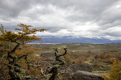 Patagonia (Ricardo Gallardo Pizarro) Tags: chile patagonia naturaleza nature forrest bosque torresdelpaine magallanes