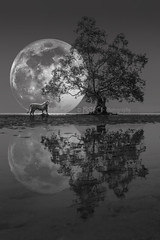 White Tiger (spintheday) Tags: wild bw reflection tree animal silhouette night glow fullmoon moonlight whitetiger natual