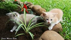Baby cats (_nise_) Tags: cute animal cat garden kitten feline kitty gato kawaii felino gatinho bonitinho