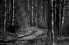 Path to the forest (- Man from the North -) Tags: trees blackandwhite bw nature monochrome finland dof bokeh path naturallight zenit westcoast manualfocus naturephotography ostrobothnia manuallens russianlens nikond7000 zenit40285mmf15