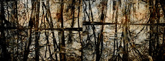 Rotting Woods (Rossdxvx) Tags: trees abstract reflection tree rot art texture nature silhouette woods experimental shadows outdoor decay michigan metallic surrealism surreal overlay textures overexposed minimalism decaying textured 2016