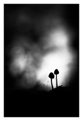 Duo au clair de lune. (SweeP_64) Tags: macro mushroom forest lune de duo au cyrille clair fort champignons masseys proxi 6ril