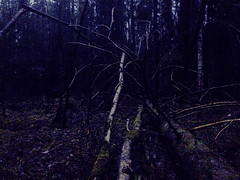 . (Lauri Laurn) Tags: trees tree art nature wet forest finland dark evening spring twilight woods branch dusk contemporaryart contemporary branches treetrunk fallen photoart obscure taiga tuusula naturephoto outsiderartists afterprocessed laurilaurn afterprocessing