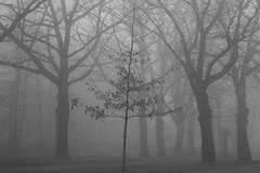 arch (Mindaugas Buivydas) Tags: morning trees bw mist tree fog dark march morninglight spring mood moody klaipeda lithuania darkforest lullaby lietuva klaipda sadnature