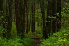 Spring (Kristian Francke) Tags: trees canada color colour tree green bc bright pentax sigma columbia british k50