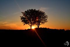 MH_0248 (Heimfotografie_) Tags: sunset sky sun skyline germany lens outside bayern deutschland bavaria evening abend nikon heaven day sonnenuntergang outdoor tag country himmel german land aussicht nikkor dslr landschaft sonne kamera deutsch aussen dlsr frankenland objektiv spiegelreflex dsrl spiegelreflexkamera d5200 ausen nikond5200 heimfotografie