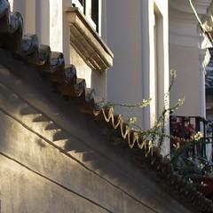 fiori sui tetti (Mi che le) Tags: flowers sunset tile square tetti roofs fiori calabria tegole maida