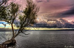I colori del lago - The lake colors (Pablos55) Tags: sunset lake tree water clouds lago tramonto nuvole albero acqua