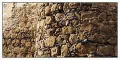 Oropesa (Victoriano Rivero) Tags: espaa calle arquitectura nikon ciudades lugares monumentos animales palomas fotografia bichos castillo piedras pomba excursin castillalamancha oropesadetoledo nikond90 joselosada bicherio