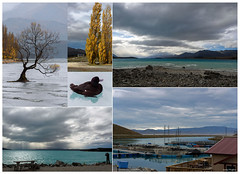Trip Home (Jocey K) Tags: trees newzealand sky people mountains water clouds buildings bench farm seat lakes ducks laketekapo ripples lakepukaki lakewanaka mtcooksalmonfarm famoustreeinwanaka