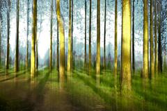 DSCF1054 (kuzdra) Tags: trees arbres fujifilm  xt10 fujifilmxt10