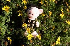 Happy Sunday - Sonntagsglck (Sockenhummel) Tags: piggy pig fuji sylvester finepix fujifilm neujahr schwein x30 chimneysweeper schornsteinfeger glcksbringer bundesplatz glcksschwein luckypiggy fujix30